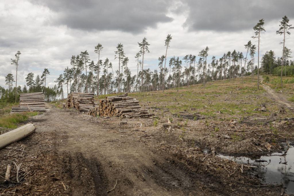 Zničený les u Kunžaku